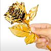 Image of gold plated rose